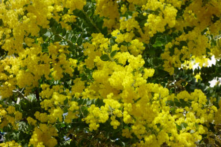 Yellow flowers blooming brilliantly and brilliantly