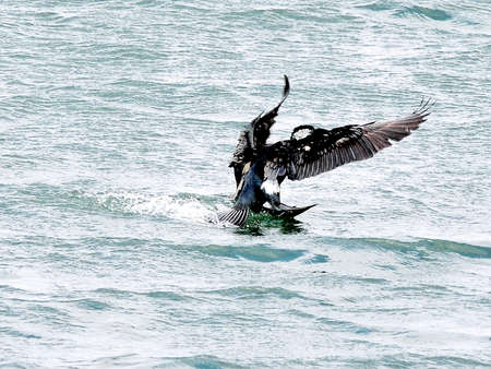 Dramatically landing on the sea where seabirds blow cold wind