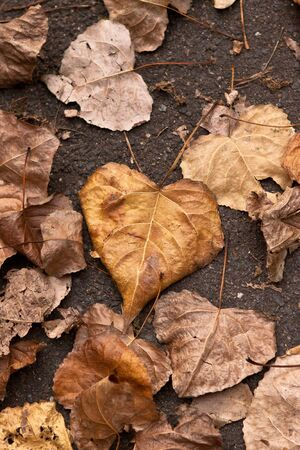 loveheart: love heart shaped leaves on the pavement Stock Photo