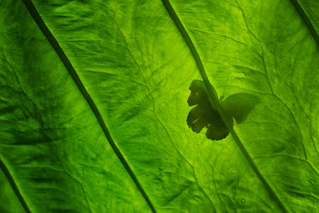 Butterfly Silhouette on Leaf