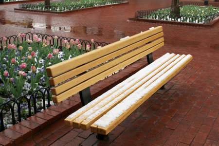 Snow Dusted Bench with Tulips