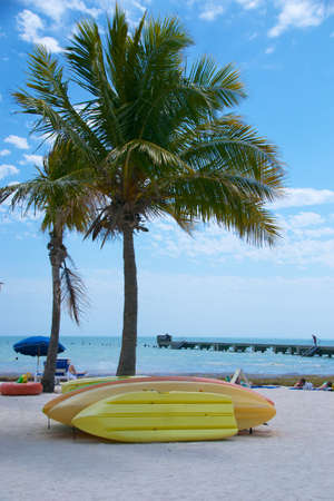 kayaks rest by a palm tree at Higgs Beach in Key West