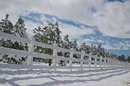 beautiful snowy fence line with pine trees