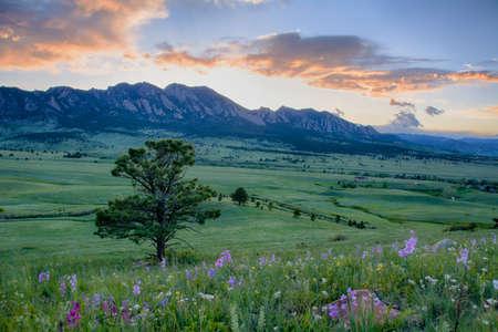 볼더, 콜로라도의 롤링 녹색 언덕 위에 아름 다운 야생화 일몰 스톡 콘텐츠