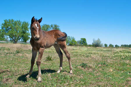 Brown Foal Stock Photo