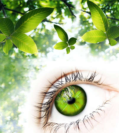 One human eye made of green leaves surrounded by elements of nature A green vision for a better world   Stockfoto