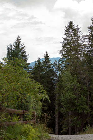 unspoilt: Wooden fence and trail towards the forest on an overcast day