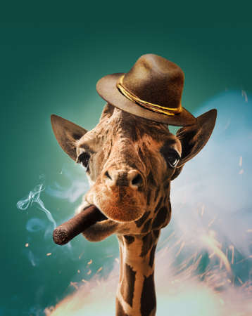 photomanipulation: Cool giraffe with cigar and hat on turquoise background. Stock Photo