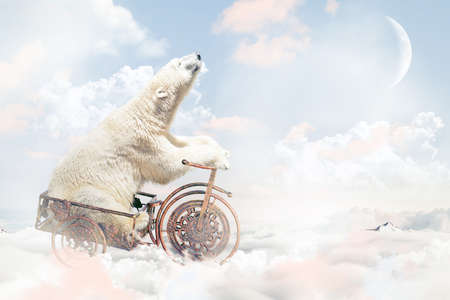 pink teddy bear: Polar bear in a vintage cart above the clouds.