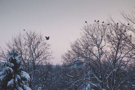 december sunrise: Tranquil winter lanscape with birds flying or standing in trees against a colorful sunset sky