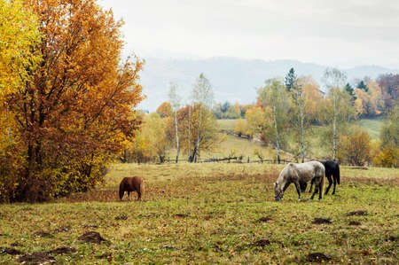 Rural landscape with grazing horses on pasture in the mountains. Stock Photo