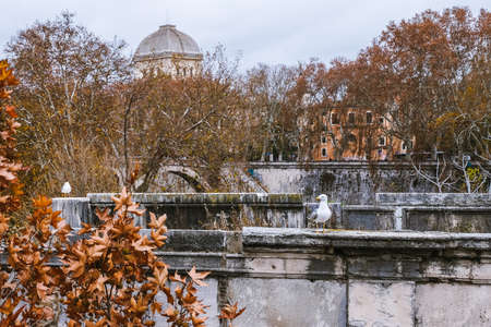 Curious seagulls close to the Tiber river, sitting on the bridge in an autumn-dressed Rome.