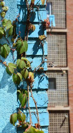 climbing plant: climbing plant