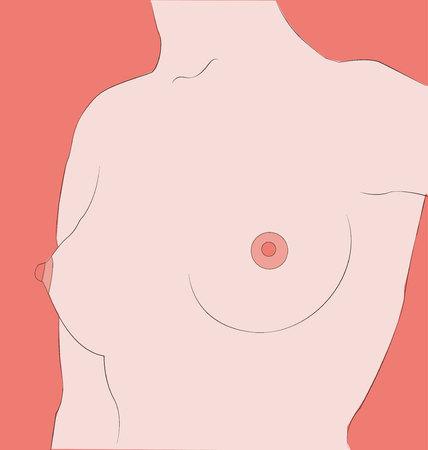 female torso Illustration