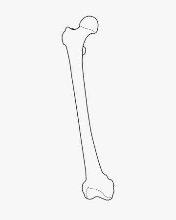 bones of the foot: foot bones