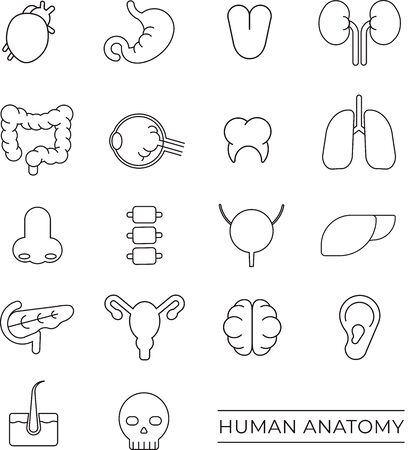 Human anatomy icons in black Иллюстрация