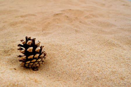 pine  fruit: Pine tree fruit on sand beach Editorial