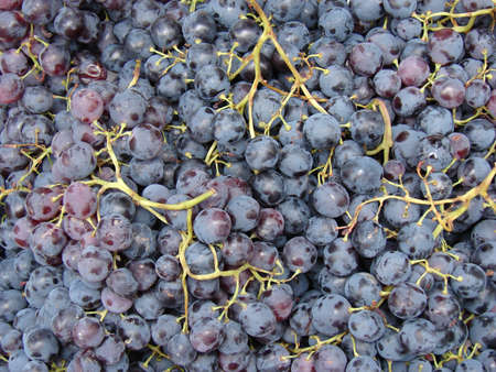 Blue grapes as a background