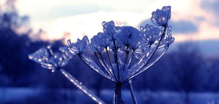 icy plants Stock Photo - 8573095