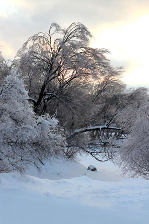 winter landscape Imagens