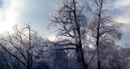 Trees covered with ice as a winter picture
