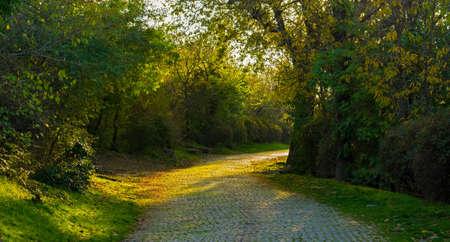 empedrado: Camino pavimentado iluminado en un parque