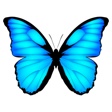 Blue Butterfly. Vector illustration of exotic butterfly isolated on white background. Morpho menelaus from Brazilia Vettoriali