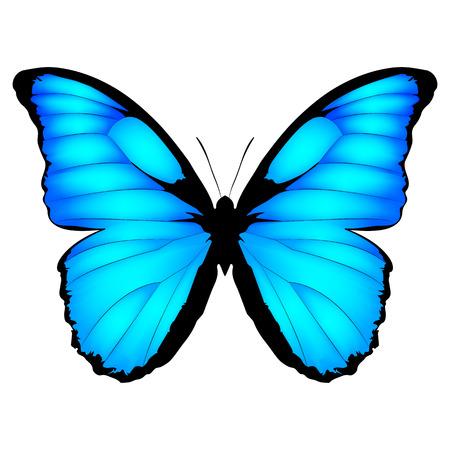 Papillon bleu. Illustration vectorielle de papillon exotique isolé sur fond blanc. Morpho menelaus de Brazilia