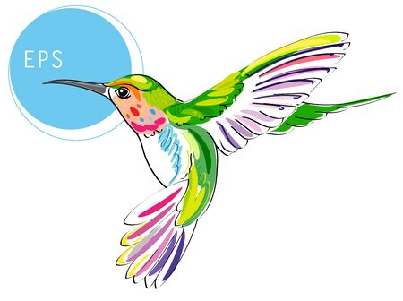 Colibri Bird. Bright vector illustration of exotic flying humming bird isolated on white background