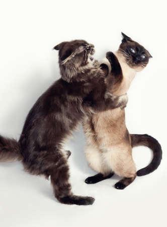 hiss: cats Stock Photo