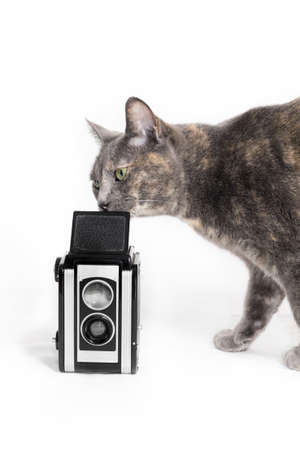 Curious inquisitive cat smelling a vintage camera photo
