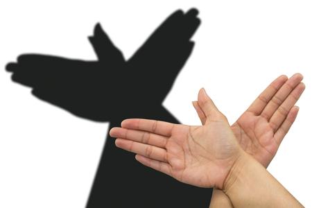 Dove schaduw de hand. Shadow theater met handen met een duif Stockfoto - 59027418