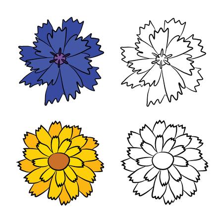 Drawing of Cornflower. Drawing of Calendula. Flat wildflowers Illustration