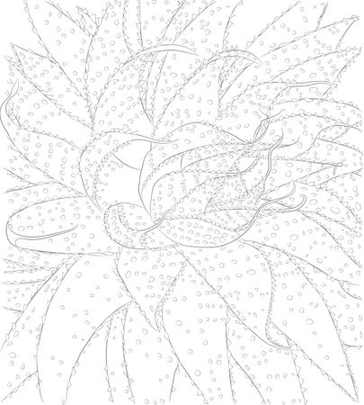 Vektorkonturillustration des Kaktus mit Stacheln für Malbuch. Botanische Umrisszeichnung der Grünpflanze. Bild von heimischen Pflanzen Vektorgrafik