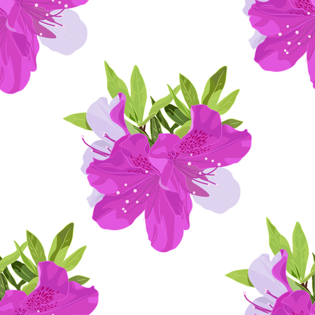 Vector Pattern of Dwarf Korean Azalea with Leafs. Botanical Seamless in Fuchsia Colors. Floral Seamless of Plant from Kind of Rhododendron. Evergreen Azaleas Isolated on White Background Ilustrace