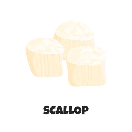 Vector Realistic Illustration of Raw Fresh Scallop isolated on White Background. Detailed Icon of Scallop in Cartoon Flat Style. Edible Marine Molluscs. Tasty Sea Products. Concept Design of Seafood