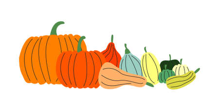 Vector flat set of various pumpkins isolated. Colorful squash, gourd and other vegetables. Traditional food for Thanksgiving day and Halloween. Autumn design element. Horizontal banner with copy-space