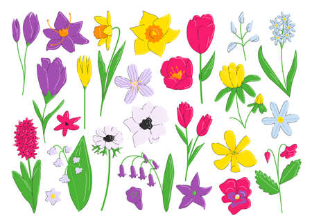 Early blooming spring flower collection isolated on white. Nature, plants and organic objects. Botanical and floral set. Summer design elements, realistic shapes. Vector flat linear illustration
