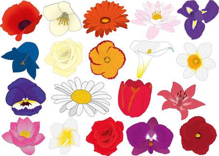 Garden flowers vector illustration iris, water lily, gerbera, jasmine, poppy, narcissus, calla, hibiscus, rose, campanula, lily, tulip, daisy, pansy, orchid, plumeria, lotus