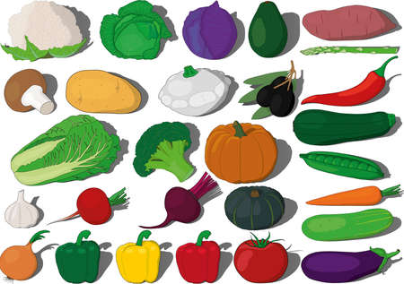 Different vegetables vector ilustration collection, sweet potato, avocado, red, white and peking cabbage, cauliflower, mushroom, potato, zucchini and squash, asparagus, olives, chili pepper, broccoli