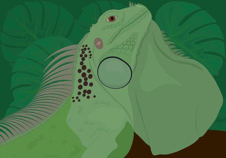 Green iguana reptile lizard vector illustration