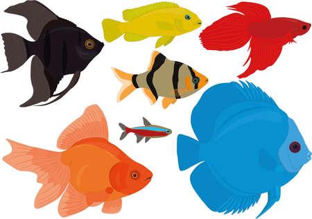 Aquarium colorful tropical fish collection vector illustration