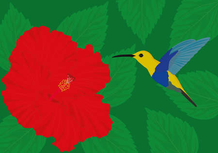 Colorful hummingbird with red hibiscus flower on green background vector illustration