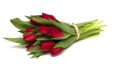 tied red tulips isolated on white background photo