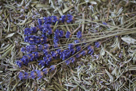 dried lavender lrafs  photo