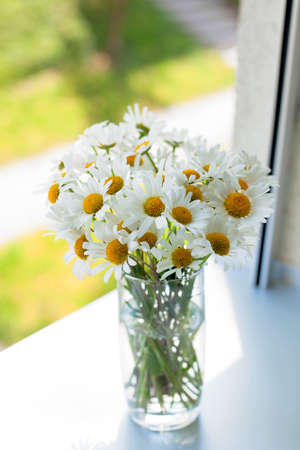 daisies on a window-sill photo