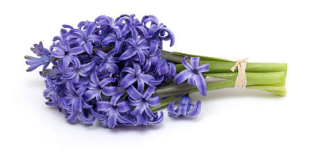 bunch of hyacinth tied isolated on white