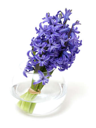 hyacinth flowers in vase isolated on white photo