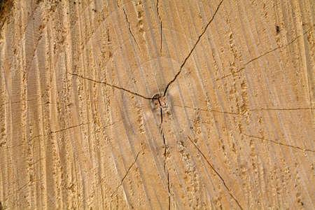 texture of tree stump Stock Photo - 13935555