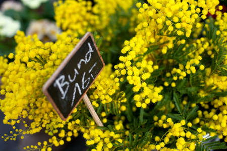 mimosa at flower market photo